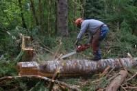 Od zaraz oferta sezonowej pracy w Niemczech jako pilarz leśnictwo Hannover