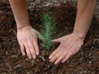 Leśnictwo sezonowa praca Niemcy jako Pracownik do zadrzewiania lasów