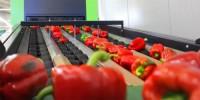 Oferta pracy w Niemczech dla kobiet od zaraz bez języka pakowanie warzyw