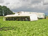 Sezonowa praca w Niemczech bez języka od lipca 2016 zbiory warzyw Cappeln