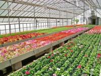 Sezonowa praca Niemcy od zaraz w ogrodnictwie Lipsk przy kwiatach