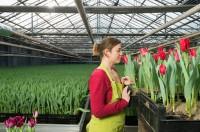 Ogłoszenie sezonowej pracy w Niemczech dla par przy kwiatach w ogrodnictwe Emsland