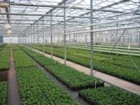 Niemcy praca sezonowa od zaraz w ogrodnictwie przy sadzonkach w szklarni bez języka Gensingen