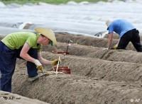 Oferta sezonowej pracy w Niemczech zbiory szparagów od zaraz Bremen