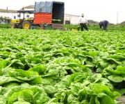 Sezonowa praca Niemcy bez znajomości języka przy zbiorach warzyw Erfurt
