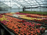 Ogrodnictwo sezonowa praca w Niemczech przy kwiatach od zaraz Bremen 2015