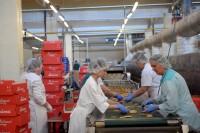 Praca w Niemczech od zaraz bez języka na produkcji cukierniczej Krefeld