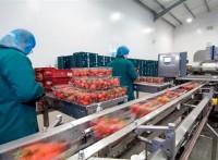 Oferta pracy w Niemczech pakowanie owoców bez znajomości języka Kolonia
