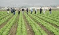 Cappeln dam sezonową pracę w Niemczech od kwietnia zbiory warzyw
