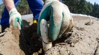 Od maja 2016 zbiory szparagów na plantacji dam sezonową pracę w Niemczech