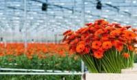 Niemcy praca sezonowa w ogrodnictwie przy kwiatach bez języka Frankfurt nad Odrą