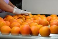 Niemcy praca fizyczna dla par bez znajomości języka sortowanie owoców Essen