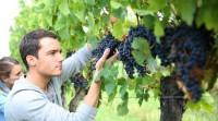 Winobranie praca Niemcy sezonowa przy zbiorach winogron od zaraz Bonn
