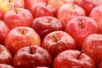 Dla par sezonowa praca w Niemczech przy zbiorach jabłek od zaraz bez języka