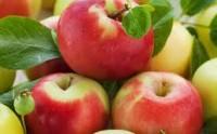 Hamburg dam sezonową pracę w Niemczech przy zbiorach jabłek od zaraz