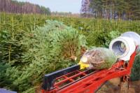 Oferta sezonowej pracy w Niemczech przy choinkach w leśnictwie od zaraz