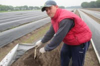 Ogłoszenie sezonowej pracy w Niemczech od zaraz zbiory szparagów 2017