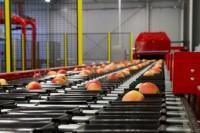 Fizyczna praca w Niemczech od zaraz sortowanie owoców bez języka Cottbus