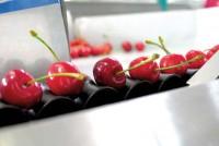 Niemcy praca fizyczna dla par przy sortowaniu owoców bez języka Berlin