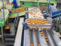 Bez znajomości języka fizyczna praca Niemcy dla par sortowanie owoców w Hamburgu