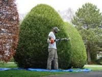 Fizyczna praca w Niemczech w ogrodzie i przy drobnych remontach Frankfurt nad Menem