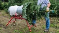 Sezonowa praca w Niemczech bez języka przy choinkach w leśnictwie Neustrelitz