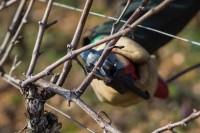 Niemcy praca sezonowa w rolnictwie 2018 bez języka przy winorośli Kröv