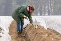 Dam sezonową pracę w Niemczech zbiory szparagów 2018 Neuwarendorf