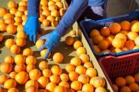 Bez znajomości języka Niemcy praca przy pakowaniu owoców od zaraz Augsburg