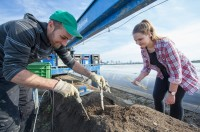 Od zaraz sezonowa praca Niemcy przy zbiorze szparagów, Kirchwahlingen 2018