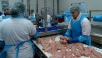 Niemcy praca na produkcji jako wykrawacz drobiu od zaraz Domsühl