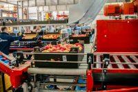 Oferta fizycznej pracy w Niemczech od zaraz sortowanie owoców bez języka Dortmund