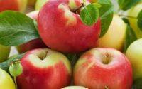 Oferta sezonowej pracy w Niemczech bez języka przy zbiorach jabłek od zaraz Stuttgart