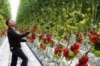 Dam pracę w Niemczech w ogrodnictwie jako kierownik szklarni blisko granicy z Polską