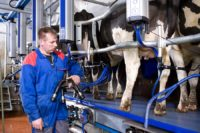 Dojarz oferta sezonowej pracy w Niemczech od zaraz w rolnictwie k. Hanoweru