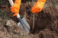 Sezonowa praca Niemcy bez języka przy drzewkach i krzewach Kolonia