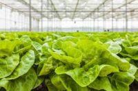 Dla par sezonowa praca Niemcy 2019 bez języka przy zbiorze warzyw Ulm
