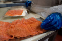 Bez języka oferta pracy w Niemczech pakowanie ryb od września 2020 w Sassnitz