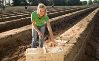 Oferta sezonowej pracy w Niemczech bez języka zbiory szparagów od zaraz 2021 Waldsee