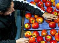 Fizyczna praca w Niemczech 2021 bez języka przy sortowaniu owoców od zaraz Hanower